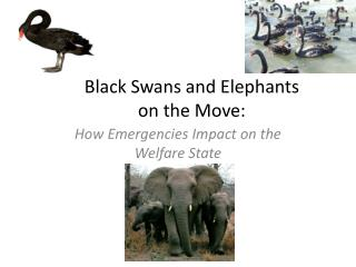 Black Swans and Elephants on the Move: