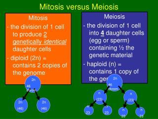 Mitosis versus Meiosis