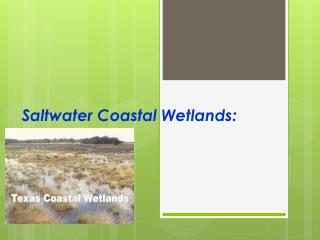 Saltwater Coastal Wetlands:
