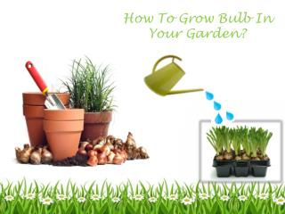 How To Grow Bulb In Your Garden?