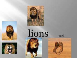 lions	 	reed