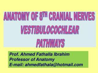 ANATOMY OF 8 TH  CRANIAL NERVES  VESTIBULOCOCHLEAR  PATHWAYS