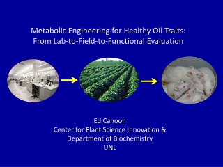 Metabolic Engineering for Healthy Oil Traits: From Lab-to-Field-to-Functional Evaluation