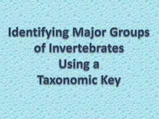 Identifying Major Groups of Invertebrates  Using a  Taxonomic Key