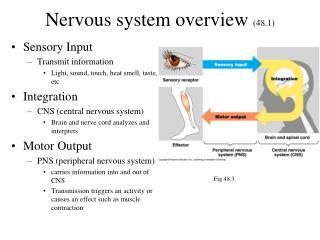Nervous system overview  (48.1)
