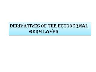 Derivatives of the ectodermal                  germ layer