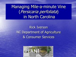 Managing Mile-a-minute Vine  ( Persicaria perfoliata )   in North Carolina