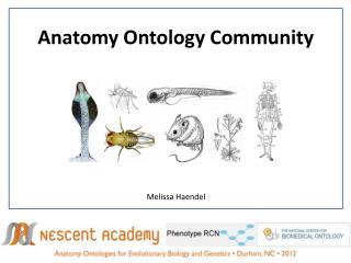 Anatomy Ontology Community