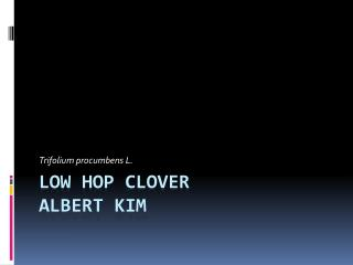 Low Hop  Clover  Albert Kim