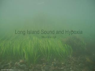 Long Island Sound and Hypoxia Olivia Marczyk