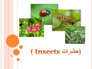 (حشرات   Insects )