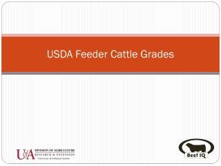 USDA Feeder Cattle Grades