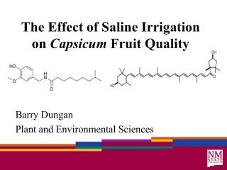 The Effect of Saline Irrigation on  Capsicum  Fruit Quality
