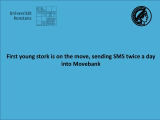 First  young stork is  on  the move ,  sending  SMS  twice  a  day into Movebank
