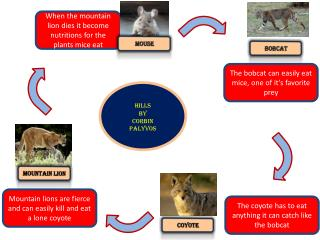 When t he mountain lion dies it become  nutritions  for the plants  mice eat