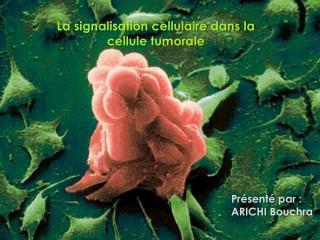 La signalisation cellulaire dans la cellule tumorale