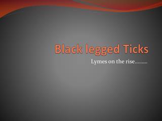 Black legged Ticks