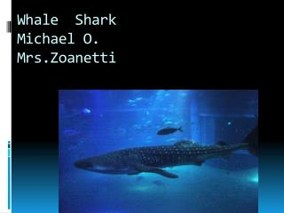 Whale  Shark M ichael  O.  Mrs.Zoanetti