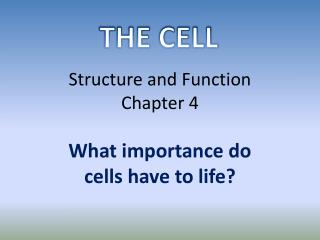 Structure and Function Chapter 4