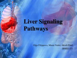 Liver Signaling Pathways