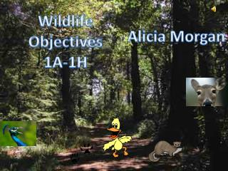 Wildlife Objectives 1A-1H