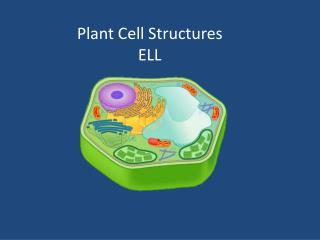 Plant Cell Structures ELL