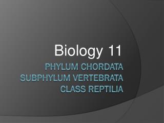 Phylum  Chordata Subphylum vertebrata   Class  reptilia