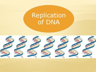 The process of making a  copy  of DNA is called  DNA REPLICATION.