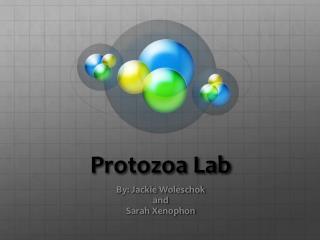 Protozoa Lab