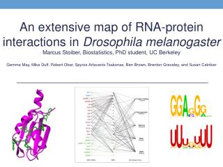 An extensive map of RNA-protein interactions in  Drosophila  melanogaster