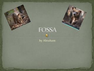 FOSSA