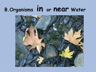 B.Organisms  in  or  near  Water
