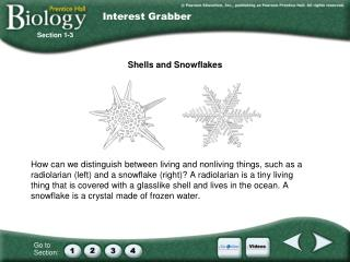 Shells and Snowflakes