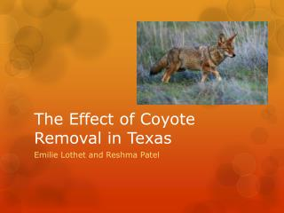 The Effect of Coyote Removal in Texas