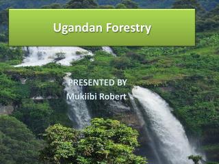 Ugandan Forestry
