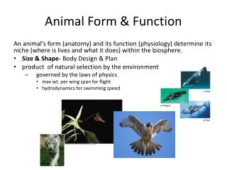 Animal Form & Function