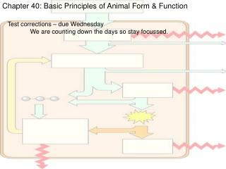 Chapter 40: Basic Principles of Animal Form & Function