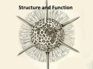 Structure and Function