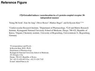 17 β -Estradiol induces  vasorelaxation  in a G protein-coupled receptor 30-independent manner