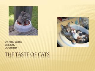 The Taste of Cats