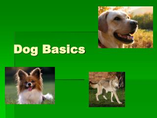 Dog Basics