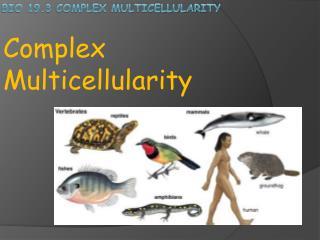 Bio 19.3 Complex Multicellularity