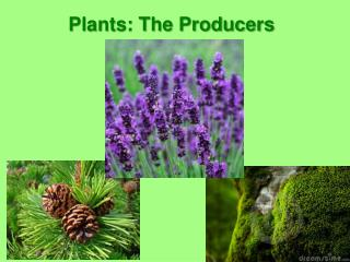 Plants: The Producers