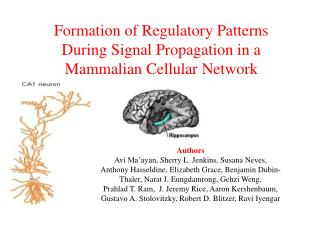 Formation of Regulatory Patterns  During Signal Propagation in a Mammalian  Cellular  Network