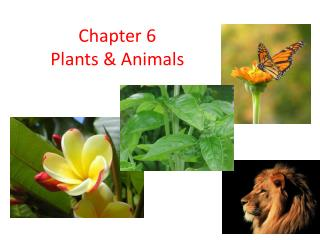 Chapter 6 Plants & Animals