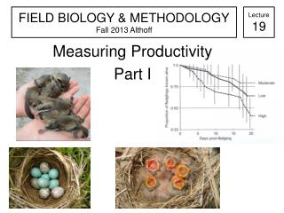 Measuring Productivity  Part I