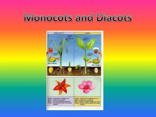 Monocots and Diacots
