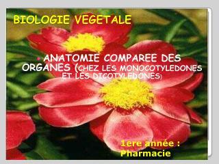 BIOLOGIE VEGETALE