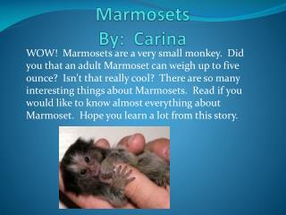 Marmosets By:  Carina