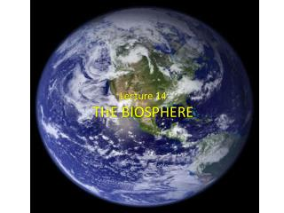Lecture 14 THE BIOSPHERE